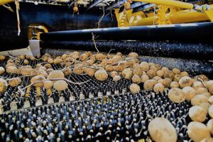 Cosechadoras de patata - Máquinas agrarias integrales