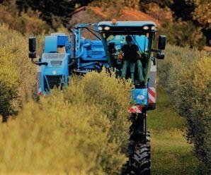 Cosechadoras de olivar superintensivo. Tipos y cómo trabajan