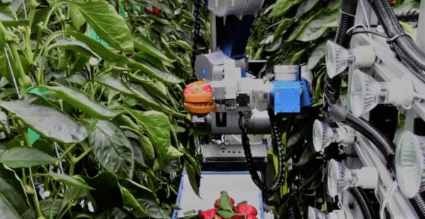 Robots en invernadero